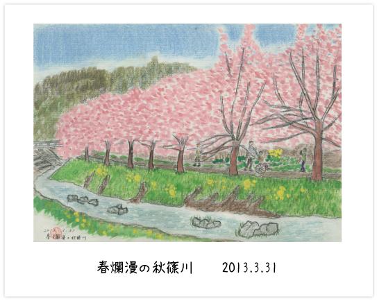 春爛漫の秋篠川