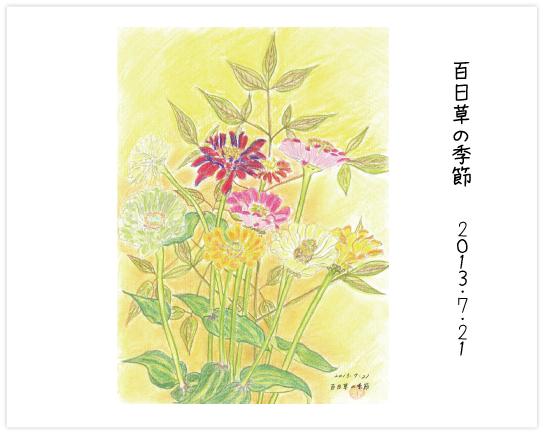 百日草の季節