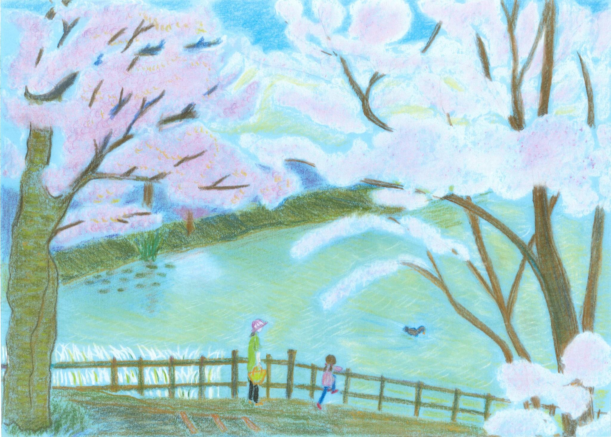 あやめ池の桜満開